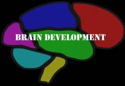 Navigating the Brain - FamilyConsumerSciences com