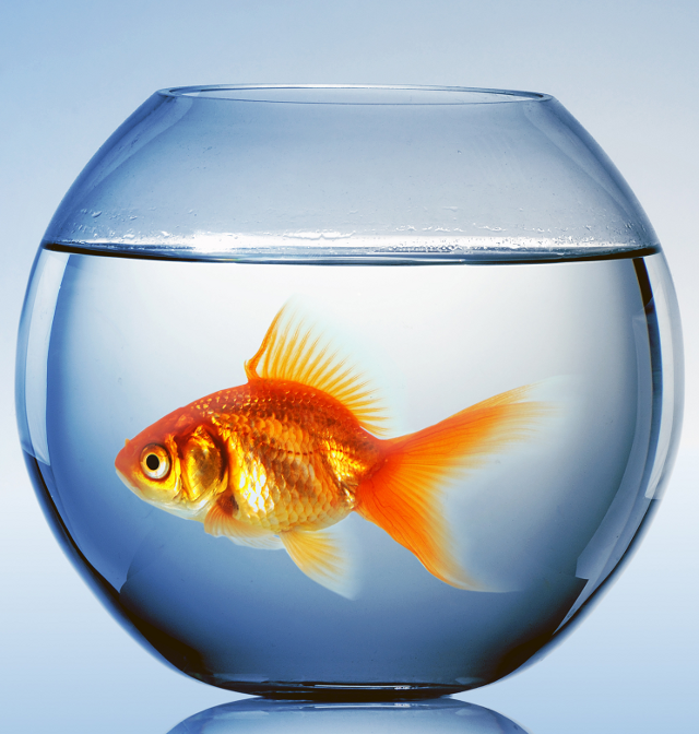 Online dating fishbowl