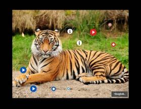Thinglink.Tiger